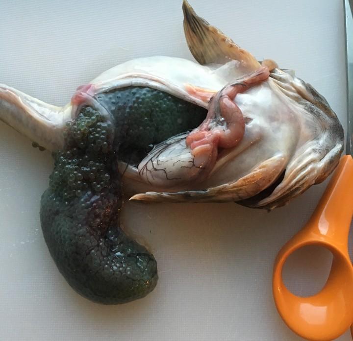 Tomaattinen kalasoppa